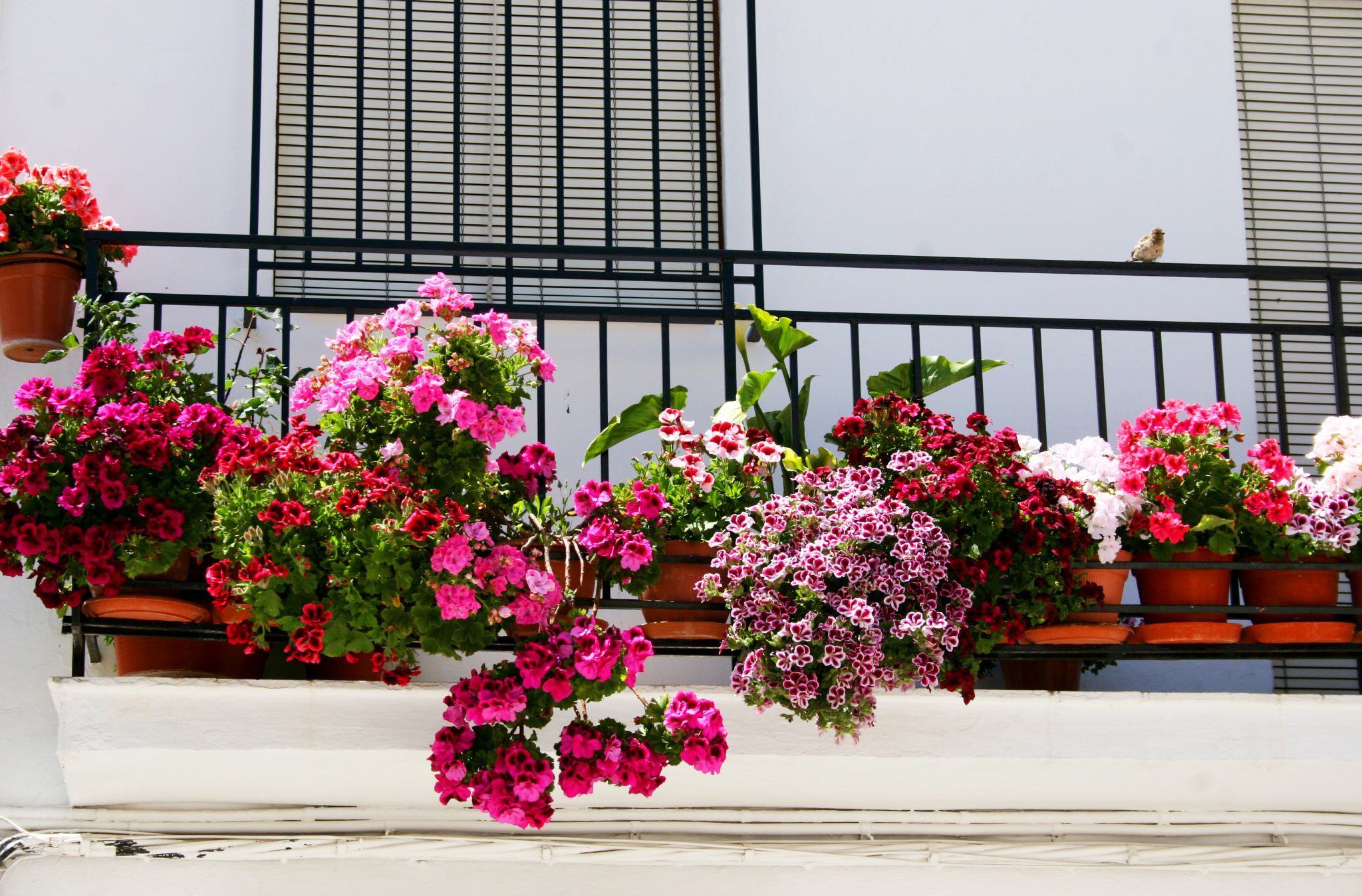 Cycling in Andalucia, Spain - Flowers!