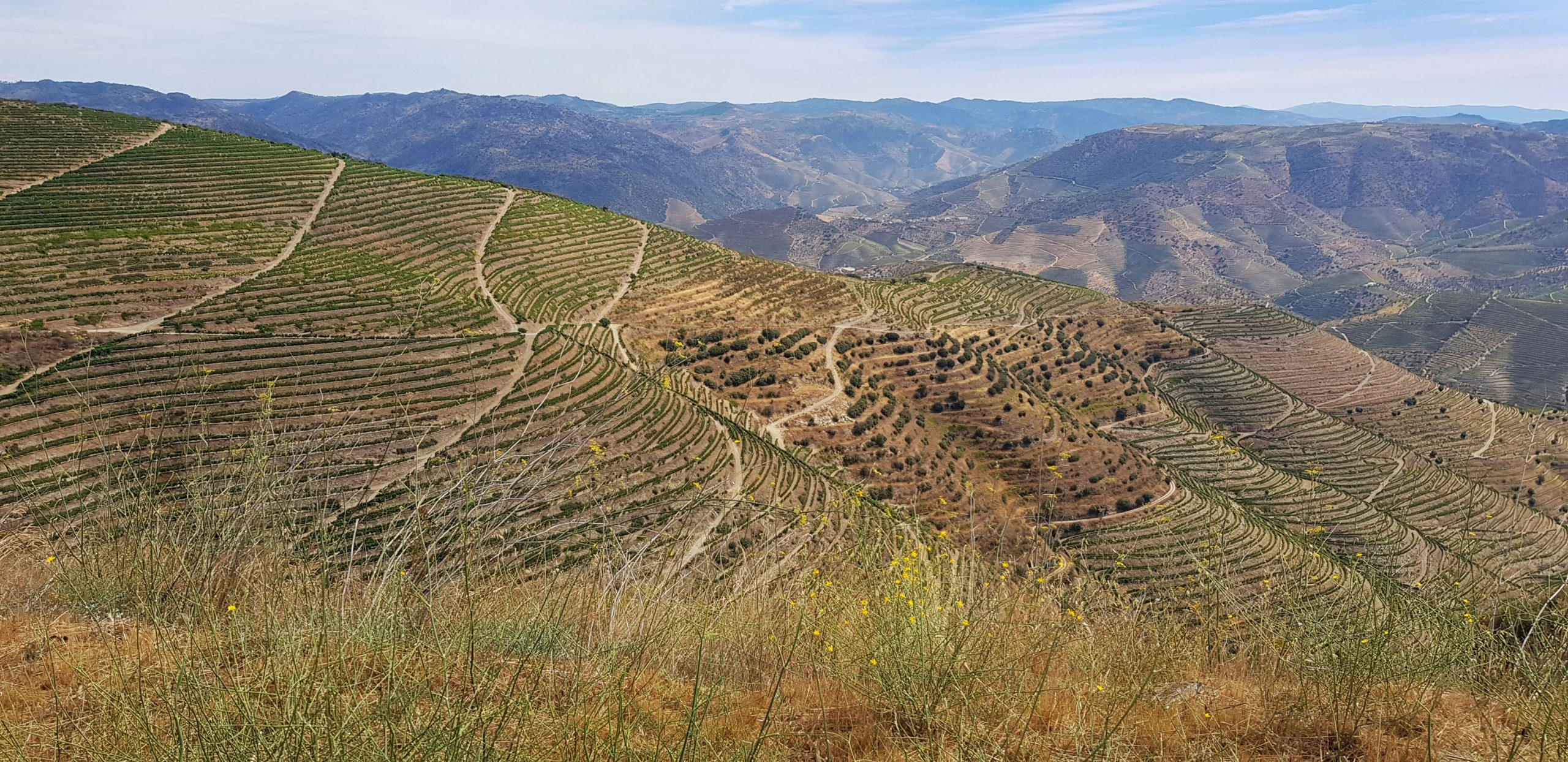 Douro's Wine Region Cycling Tour