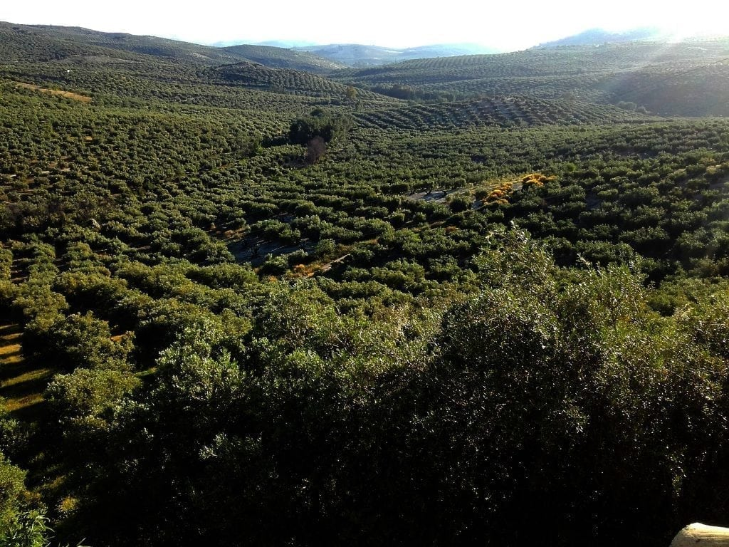 Road Cycling Olive Groves, Andalucia, Spain