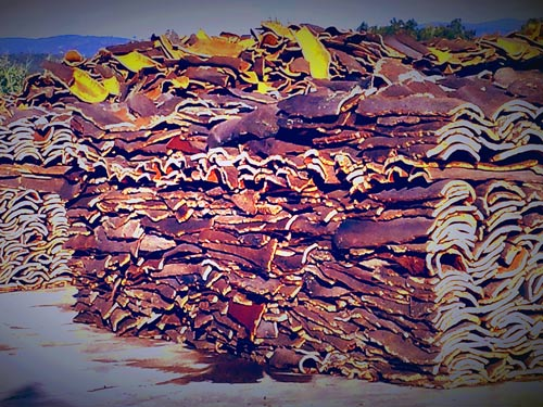 Cork Portugal's Sustainable Crop - Cork Bark, cut and ready to be Processed