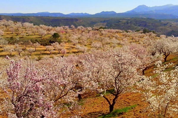 Visit Andalucia in Spring - Smell the Almond blossoms
